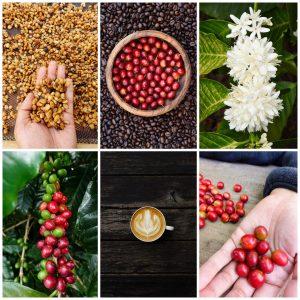 Celebrate Coffee in Lincoln